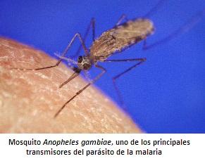 parasito malaria