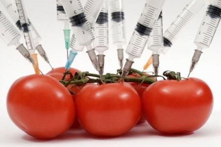 Detección de Organismos Genéticamente Modificado