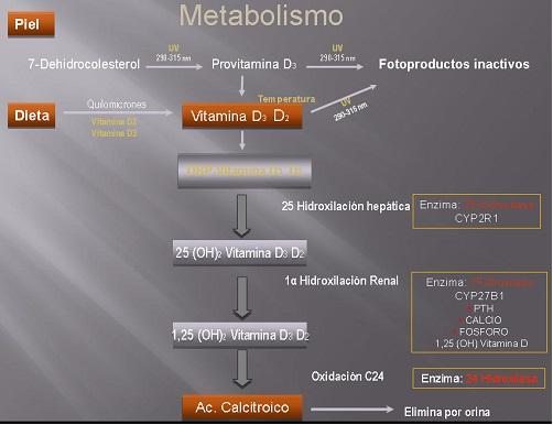METABOLISMO VITAMINA D