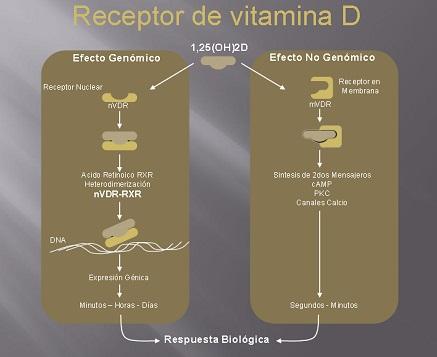 acciones vitamina D