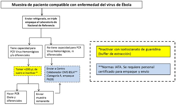 algortimo ebola