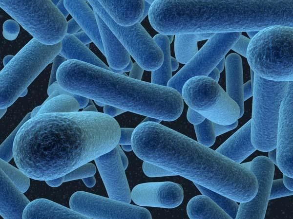 bacteria gluten