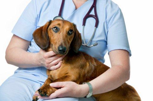 tripsina veterinaria