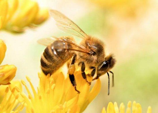 cera abeja miel