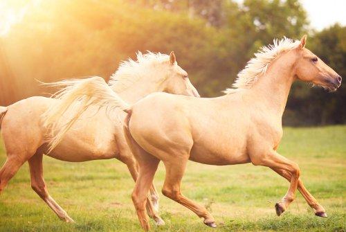 PRP caballos