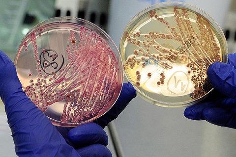 superbacteria
