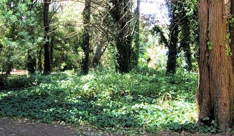 bosque arbol