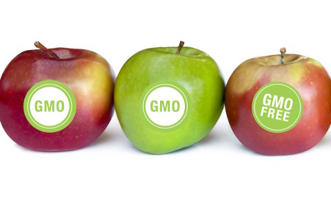 genetica alimentos