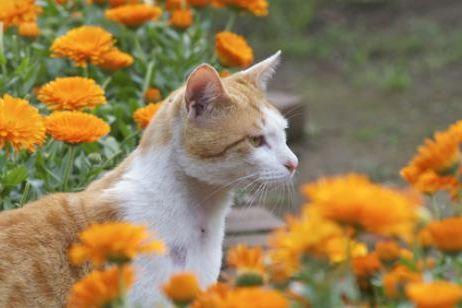 intoxicacion gato